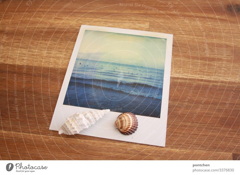 Mussels lie on Polaroid which shows the sea. Picture in picture Vacation & Travel Tourism Far-off places Summer Summer vacation Ocean Sky Mediterranean sea Blue