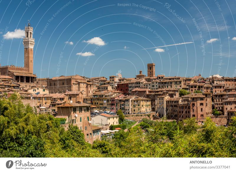 View of Siena from south with the Mangia Tower Vacation & Travel Tourism Summer Flat (apartment) House (Residential Structure) Architecture Landscape Sky Clouds