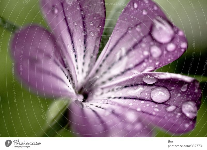 wet beauty Nature Plant Water Spring Summer Rain Flower Blossom Garden Blossoming Esthetic Wet Violet Drops of water Contrast Fresh Shallow depth of field Green