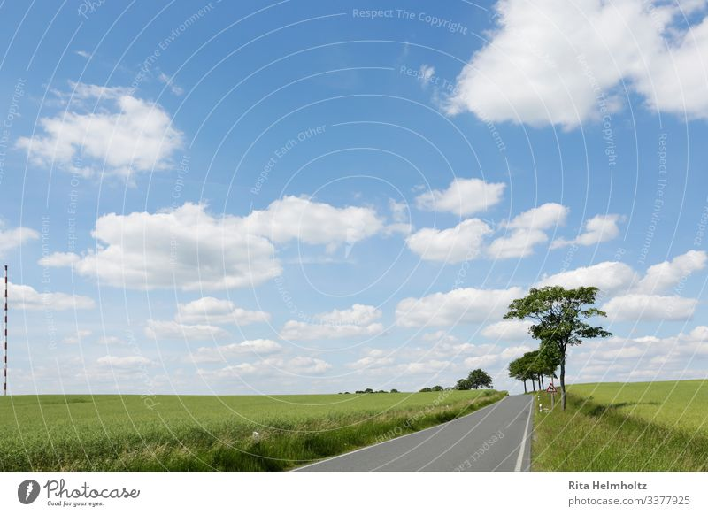 Road through green fields Environment Nature Landscape Plant Sky Clouds Climate Beautiful weather Tree Grass Agricultural crop Field Street Lanes & trails