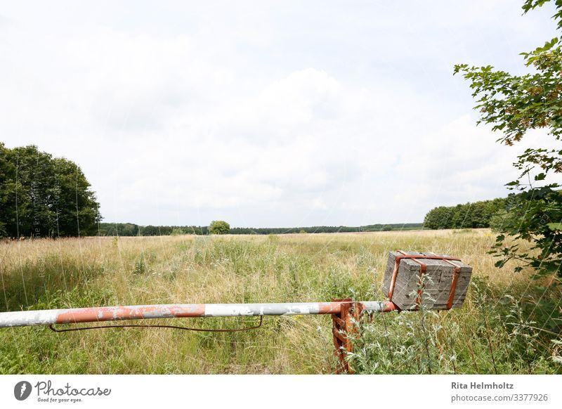 summer pasture Vacation & Travel Far-off places Freedom Summer Agriculture Forestry Environment Nature Sky Grass Agricultural crop Meadow Field Control barrier