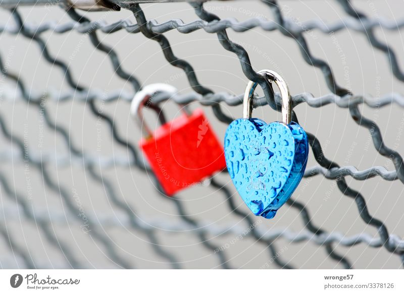 Love castles in the rain Locks Love padlock Heart-shaped Colour photo Red Blue Infatuation Romance Deserted Emotions Close-up Exterior shot Display of affection