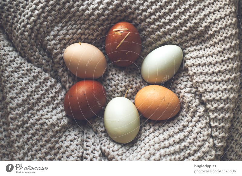 Eggs in natural colours Food Organic produce Biological Nutrition Easter Nature Spring Nest Decoration Blanket Sustainability Colour photo Subdued colour