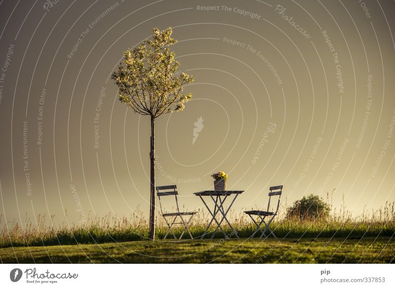 outdoor sitting Nature Landscape Sunrise Sunset Summer Beautiful weather Plant Tree Grass Blossom Pot plant Apple tree Garden Park Meadow Field Horizon Idyll