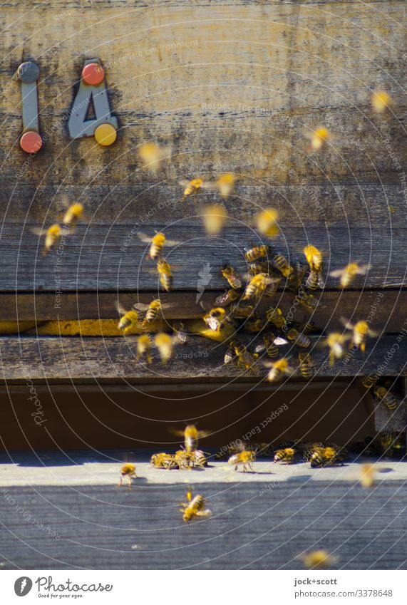 14 busy as a bee Bee-keeping Beehive Summer Beautiful weather Airport Berlin-Tempelhof Honey bee Flock Wood Flying Authentic Small Near Many Warmth Moody Agreed