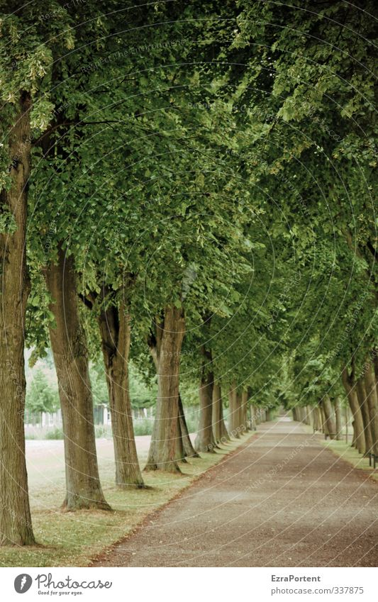 walk with me Harmonious Well-being Relaxation Calm Nature Landscape Plant Spring Autumn Tree Park Sand Wood Beautiful Brown Green Loneliness Promenade Leaf