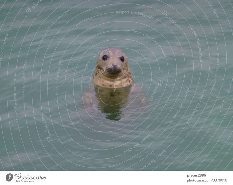 A seal looking out of the north sea Life Beach Nature Sand Looking animal aquatic big black Born breeding carnivorous cuddly cute eco ecology fin-footed harbor