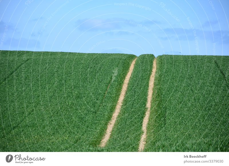 Tracks on a field Tractor track Spring Grain Sky Agriculture Green Field Colour photo Nature Plant Summer Exterior shot Landscape Clouds Horizon Deserted