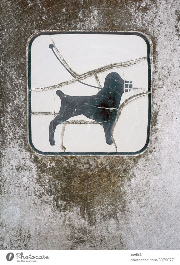 dog's life Dog 1 Animal Plastic Sign Signs and labeling Signage Warning sign Old Decline Destruction linen compulsion Dog lead Muzzle Pictogram Ravages of time