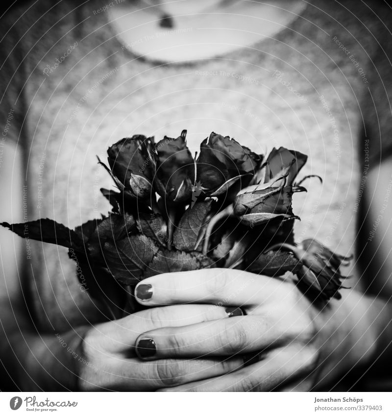 black roses for Valentine's Day Abstract black background flowers dark fashion date Date plan Woman Joy girlfriend Spring fever Emotions Gift hands Love Lovers