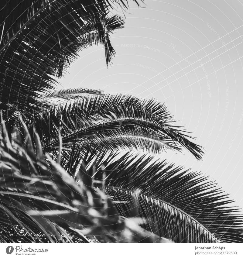 Minimal black texture background with palm leaves Abstract black background Black texture Minimalism Minimalist Black black and white black pattern dark
