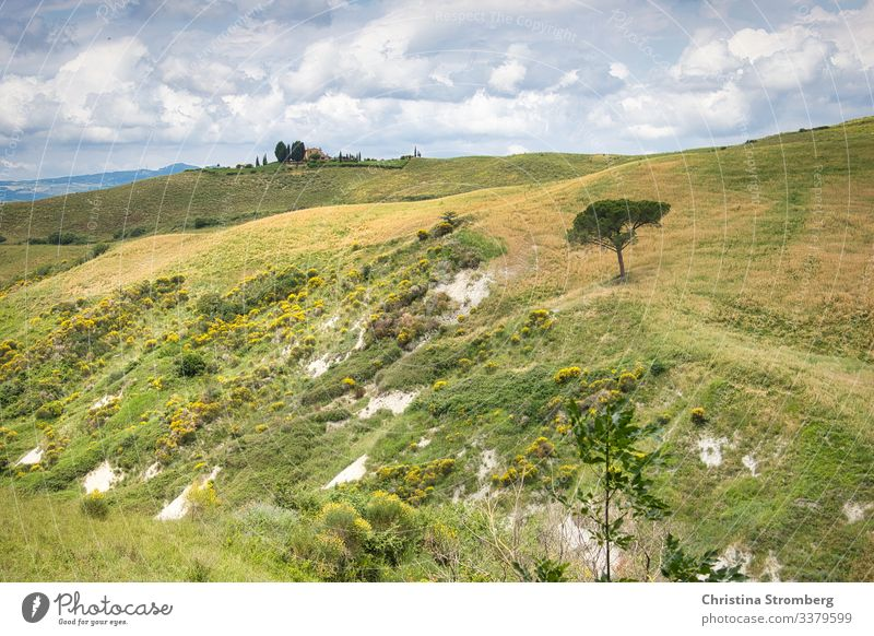 Tuscany vastness tuscany Italy italy Green wide Europe Tourism voyage Vacation & Travel Colour photo Exterior shot Deserted Landscape Summer Idyll Hill Nature
