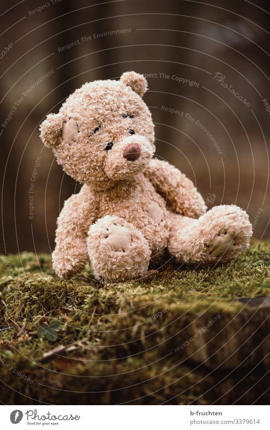 Teddy bear in the forest Playing Nature Autumn Tree Moss Forest Discover Sit Wait Cuddly Small Safety (feeling of) Individual Loneliness Figure Doomed