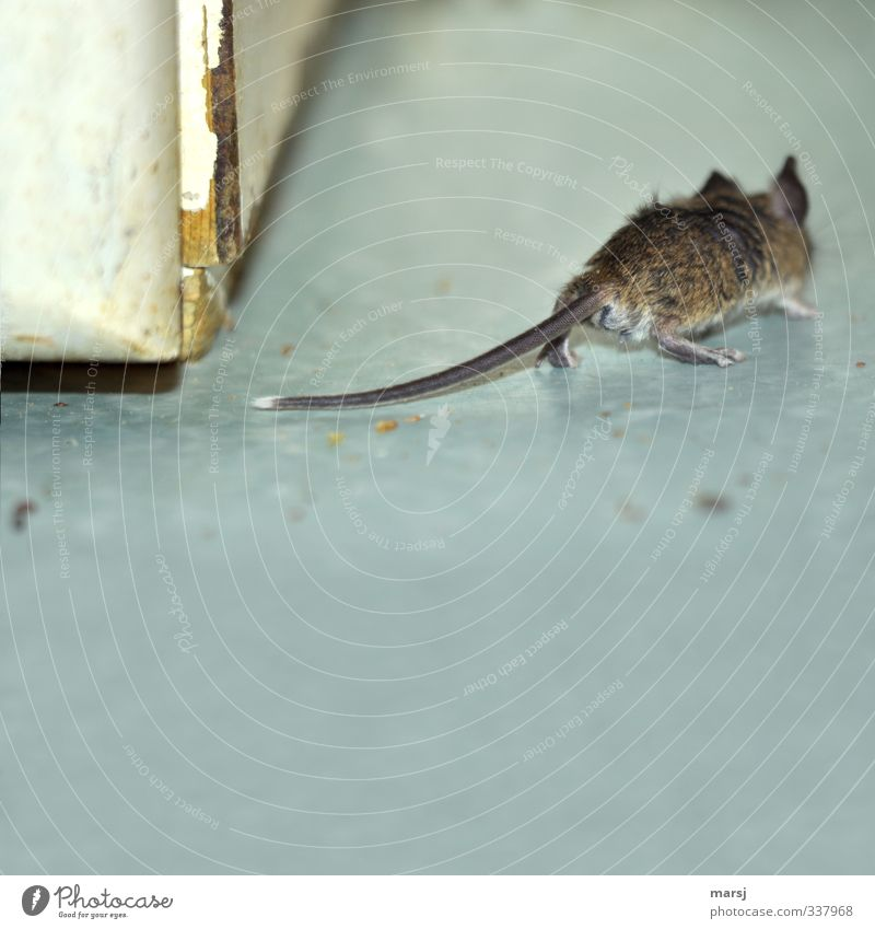 Animal Gray Walking Creepy Pet Mouse Disgust