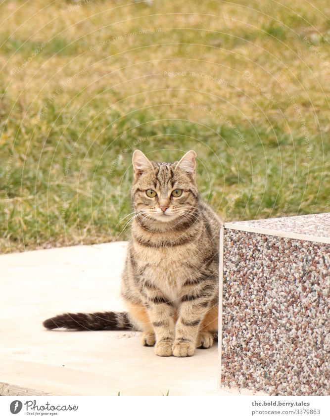 cat Beautiful weather Pet Cat 1 Animal Observe Sit Brown Green Tabby cat Colour photo Subdued colour Exterior shot Deserted Copy Space top Day Light