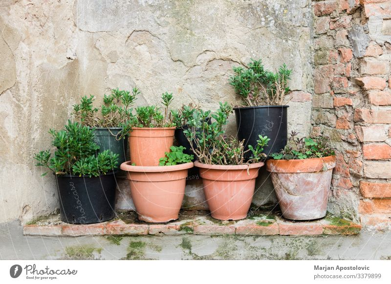 Plant Pot plant Village Wall (barrier) Wall (building) Natural Pottery Flowerpot Rustic Consistency Decorative plate Decoration Italy Tuscany Gardening Backyard