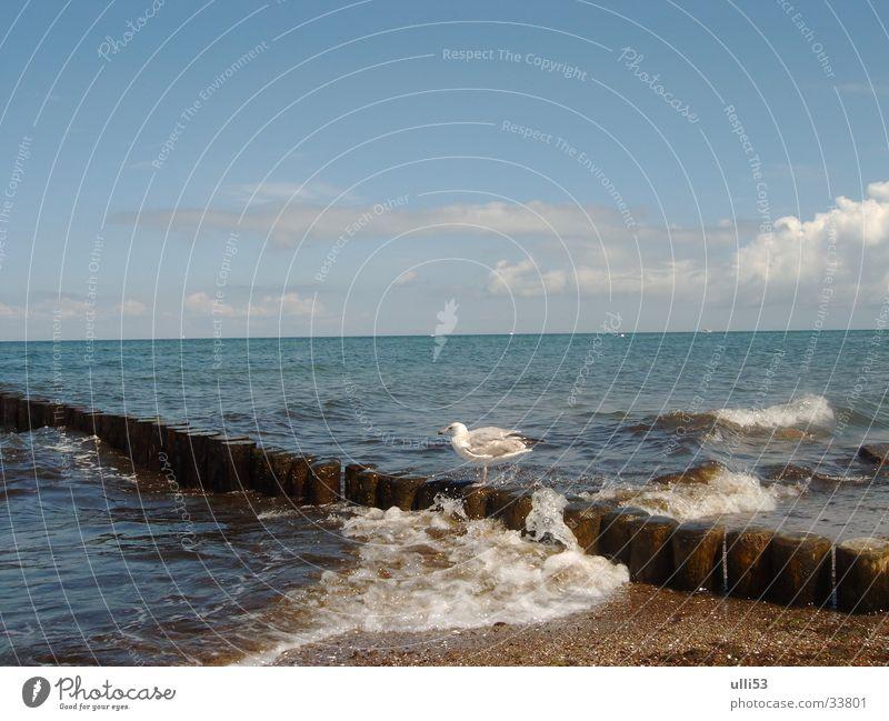 seagull on stage Baltic Sea Beach Wind Waves Water Ocean Wind speed Break water Foam foaming sea