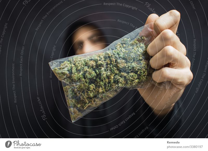 Hooded man holding a big bag of weed front his head on black background. Drug trafficking concept, buy or sell marijuana. Herbs and spices Organic produce