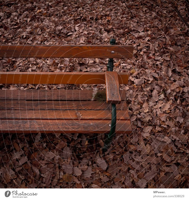 secure bank Deserted Wood Brown Bench Leaf Autumn leaves Sit Dark Park Colour photo Close-up Copy Space right Copy Space top Copy Space bottom Twilight