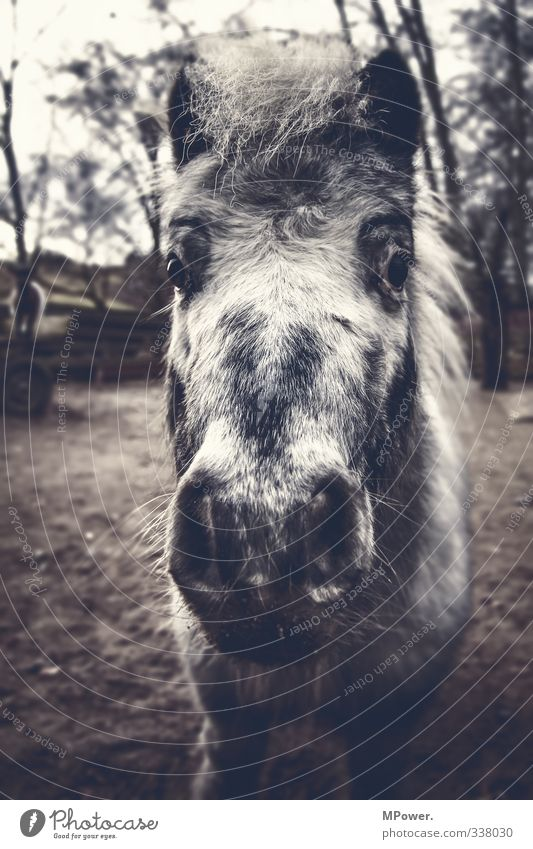 Old City Animal Gray Gloomy Horse Pelt Pasture Pony Farm animal Mane Nostrils Horse's head