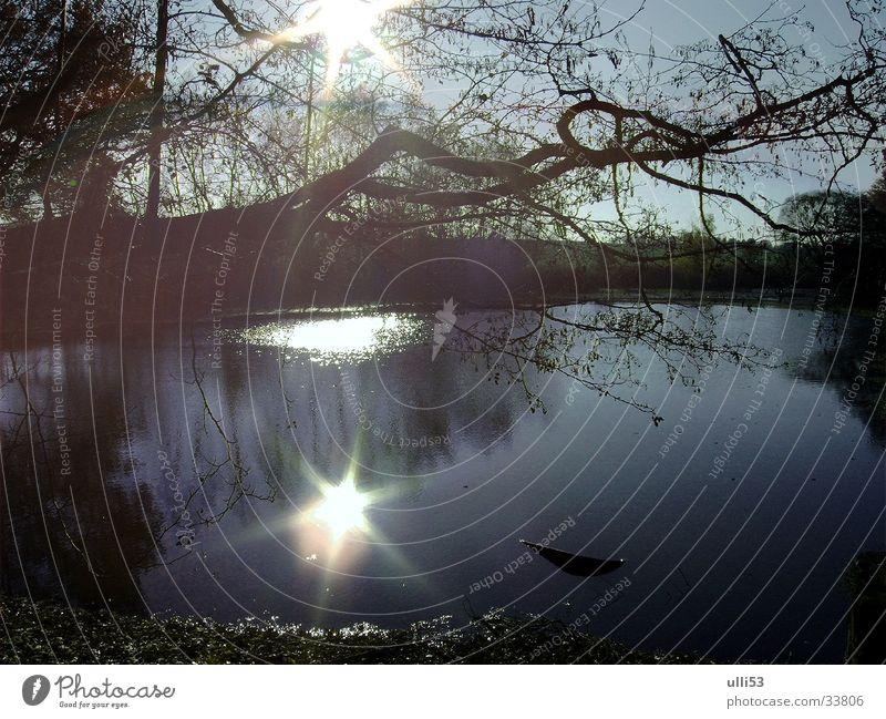 autumn day Light Autumn Back-light Reflection Water Sun Sunlight Lakeside glimmer of hope pond landscape