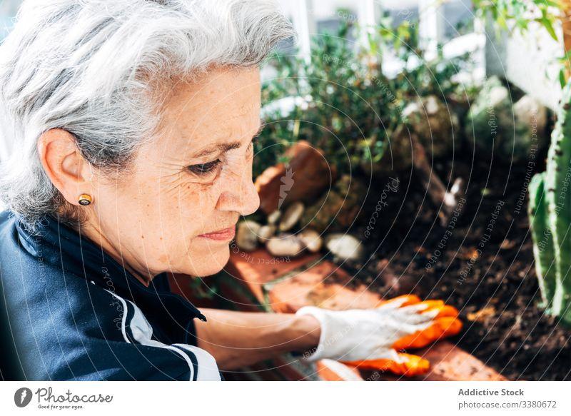 Faceless female gardener caring about plants in garden care woman glove rake cactus botany pot grow hobby flowerpot floral water green environment organic