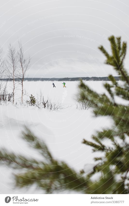 Winter field with running skiers winter nature landscape people snow forest tree spruce branch frame cloudy cold season wild countryside environment weather