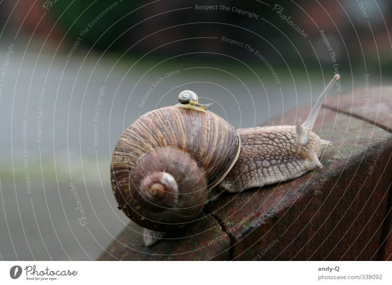 Calm Animal Brown Wild animal Logistics Team Attachment Teamwork Carrying Snail Patient Slimy Indifferent