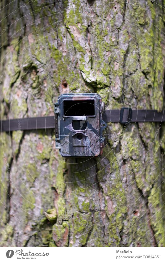 Light barrier_motion detector photo trap Wildlife camera Hunting camera Night vision camera Infrared Exterior shot Nature Forest Deserted Tree Landscape