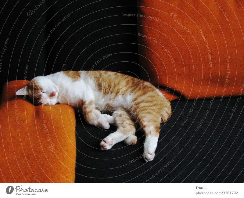 As always Living or residing Flat (apartment) Sofa Living room Animal Pet Cat 1 To enjoy Sleep Dream Beautiful Orange Black White hangover Blanket Cushion