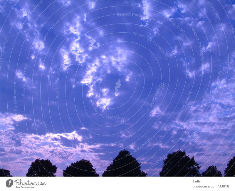 blue sky Clouds Tree Sky Blue Sun Filter