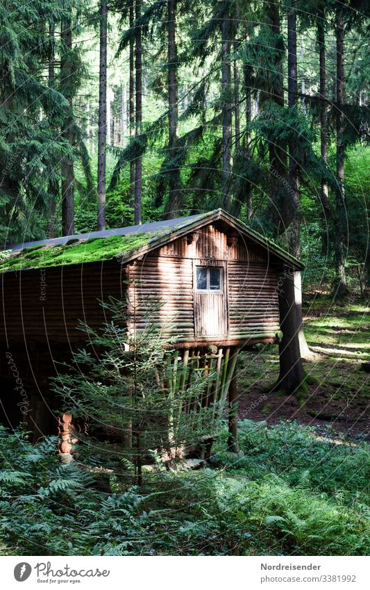 Isolated hut in the forest forester's lodge Forest House (Residential Structure) huts spruces Wooden house refuge clearing feed trough mysticism Romance