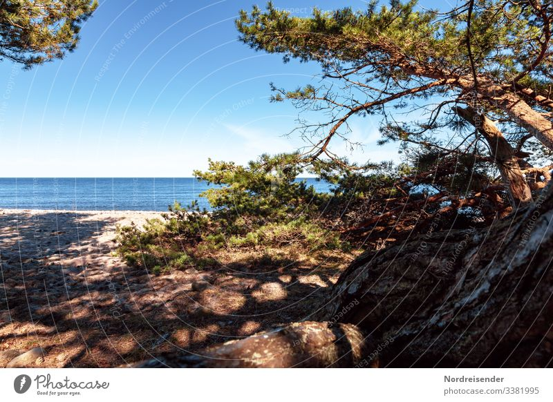 Baltic Sea beach on Öland in Sweden Calm Vacation & Travel Tourism Far-off places Freedom Camping Summer vacation Sun Beach Ocean Island Nature Landscape Sand