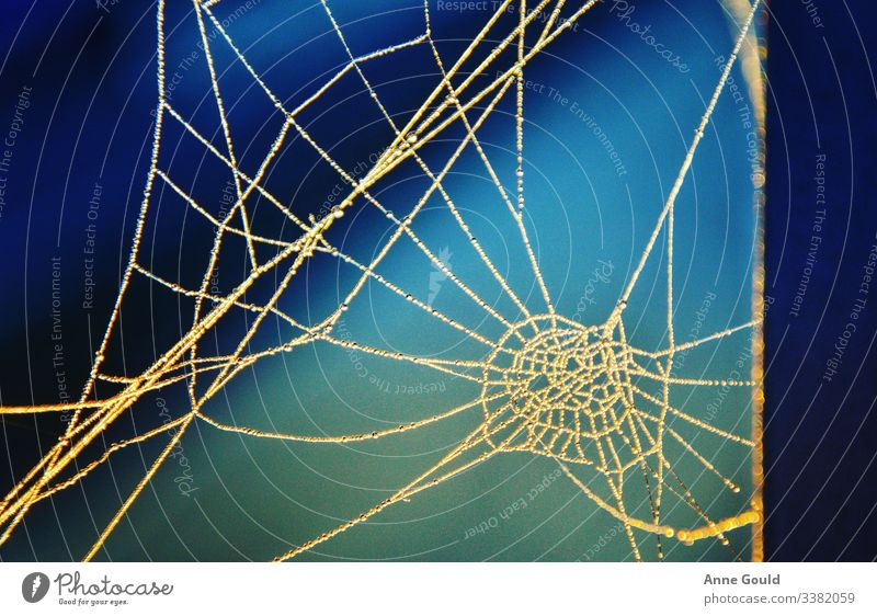 Abstract - spider web Spider's web abstract autumn drops of water rope Nature macro morning blue