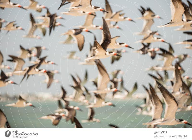 Swallowtail Flying flock bird birds Ocean Sky Grand piano White Freedom Animal Florida Keys Nature Wild animal Coast Exterior shot Colour photo Environment