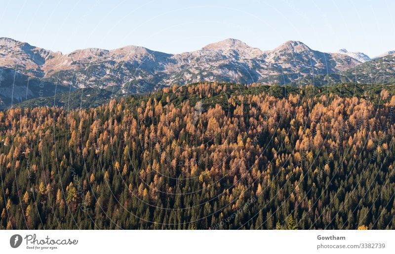 Autumn in the valley of the seven lakes in Julian Alps alpine alps autumn background beauty blue bohinj central clear ecology europe forest gorenjska grass
