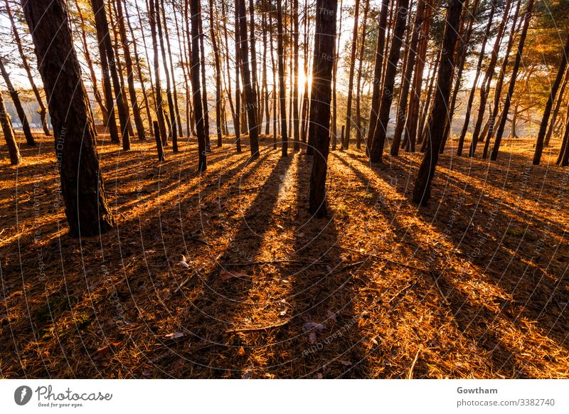Sunny dawn in the forest spring sunlight outdoor park green sunrise summer ray morning sunshine scenic scene beautiful nature landscape wood tree sunny season