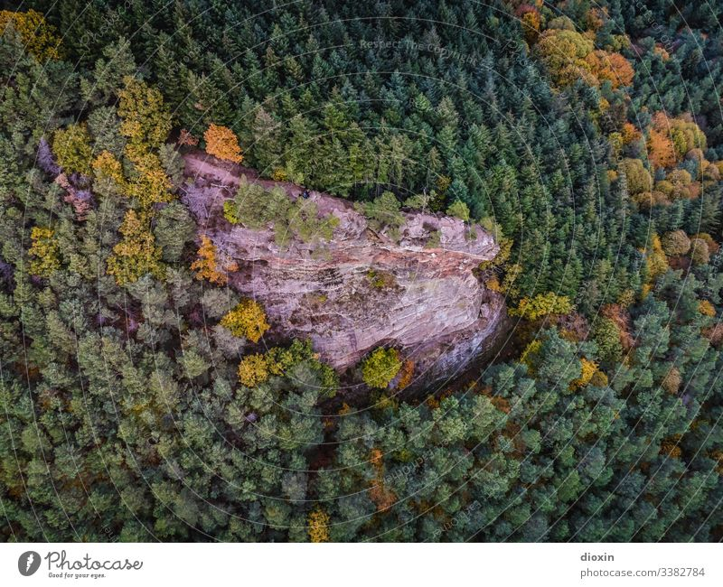 Gigantic rock formation surrounded by Central European mixed forest Forest trees Rock Sandstone Nature Landscape Exterior shot Mountains & Mountain Highlands