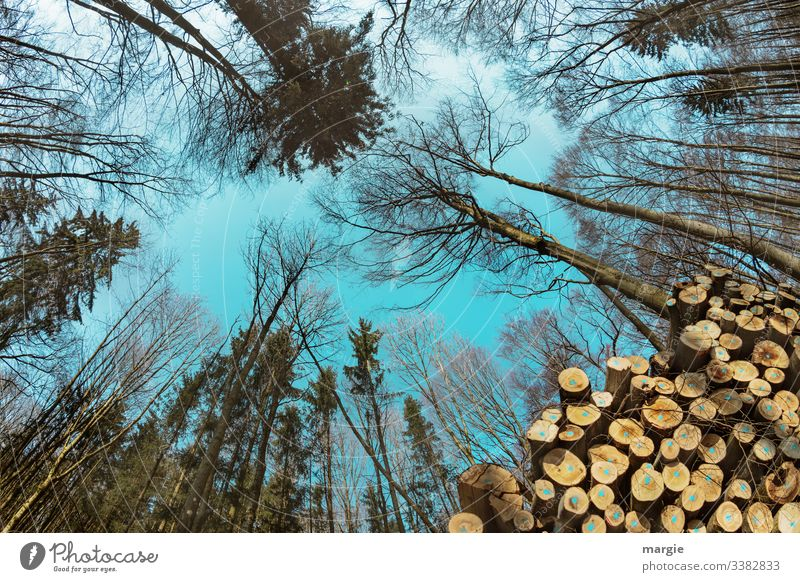 Timber industry: Trees grow into the sky Energy crisis Environment Nature Forest Save Multicoloured Green Transience Growth Change Future Tree trunk