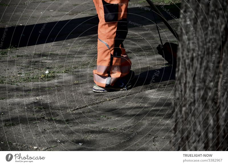 City cleaner in orange during spring cleaning of the grey concrete slabs next to a blurred partial view of a tree in the foreground Man Spring cleaning