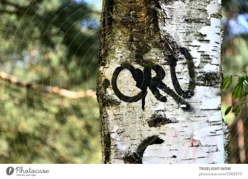 Trunk of a birch tree (partial view) with thick black letters in front of a blurred forest background Environment Nature Forest Tree Birch tree trunk Graffiti