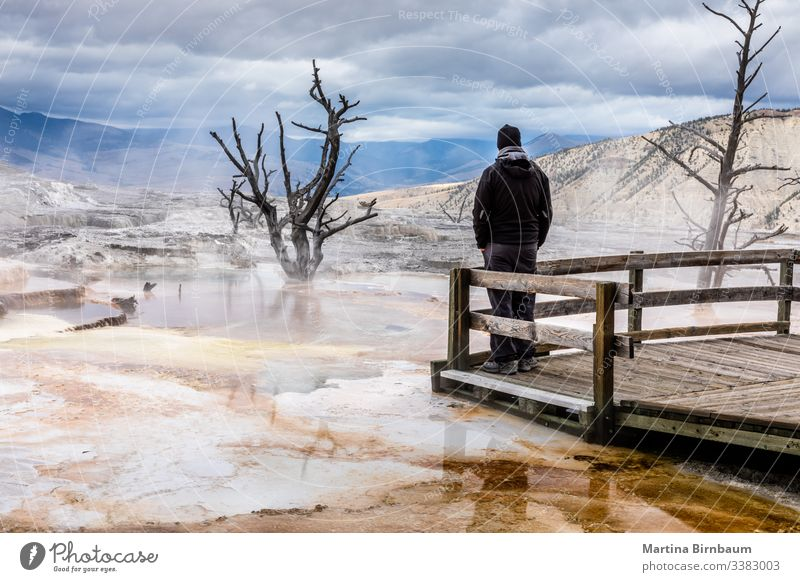 Male tourist enjoying the view on the Mammoth Hot Spring, Yellowstone National Park man one person tourism dead tree landscape mammoth hot springs wilderness