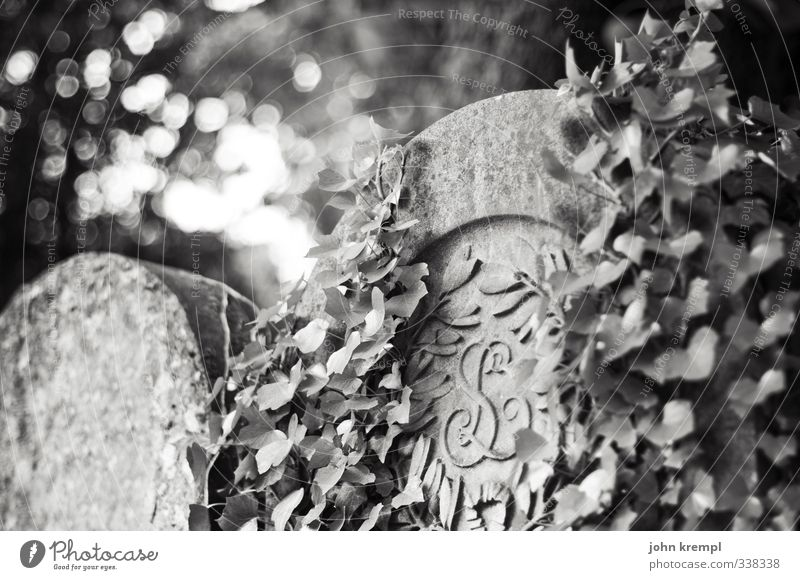 R.I.P. Ivy Paris Cemetery Tombstone Grave Stone Old Creepy Hope Belief Grief Death Longing End Apocalyptic sentiment Religion and faith Black & white photo