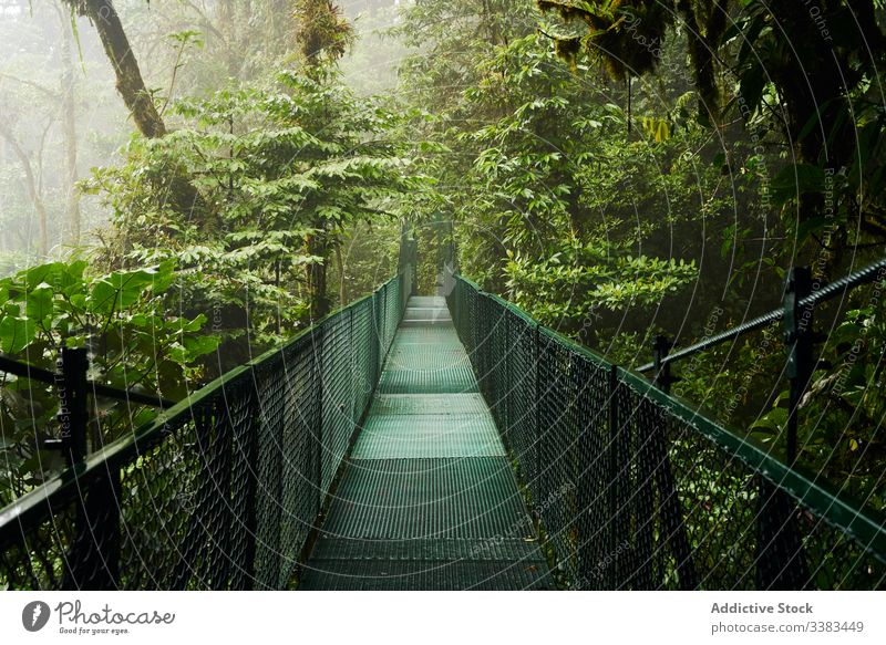 Narrow bridge through green jungle tree lush path nature landscape adventure destination costa rica travel tourism forest scenic way journey construction