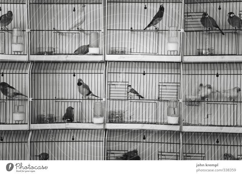 City Loneliness Animal Sadness Small Bird Wild Fear Sit Wait Group of animals Threat Longing Desire Illness Wanderlust