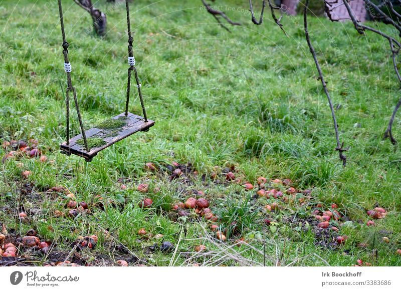 Swing in autumn Playground Joy Exterior shot To swing Infancy Garden Deserted Leisure and hobbies Colour photo Autumn Moss apples Gloomy dreariness Loneliness