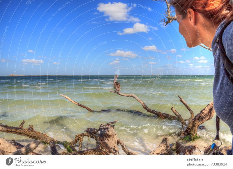 Woman bird watching a Brown pelican Pelecanus occidentalis observe Pelican brown pelican waterfowl animal wildlife swim ocean sea Sanibel Island