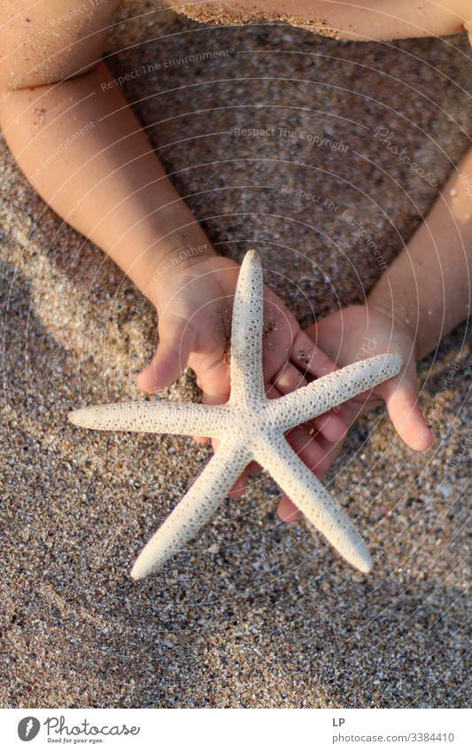starfish in the hands of a child on the beach seaside Starfish Star (Symbol) Child Ocean Nature Sand Offer Gift Summer Vacation & Travel Relaxation marine