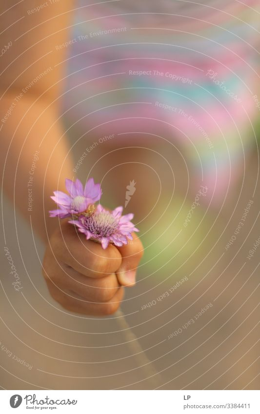 A child holding purple flowers flowers closeup Gift Nature Flower Garden Blossom Mother's Day Child gifts Bouquet Spring Pink Parents Parenting Love