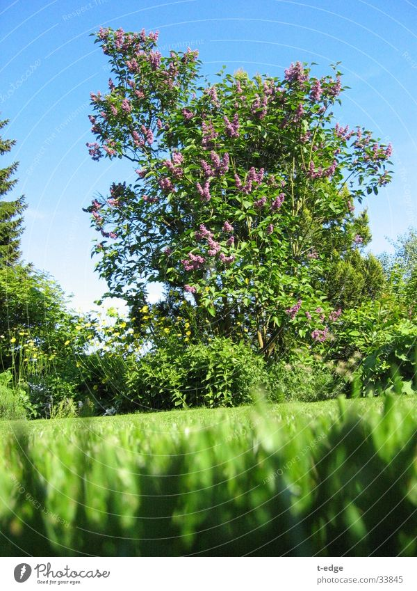 Very wide for a small ant Green Ant Lilac Garden Lawn Sun